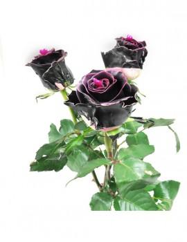 3 rose black beauty