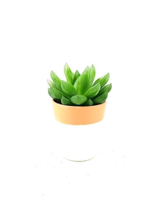 le mini succulente