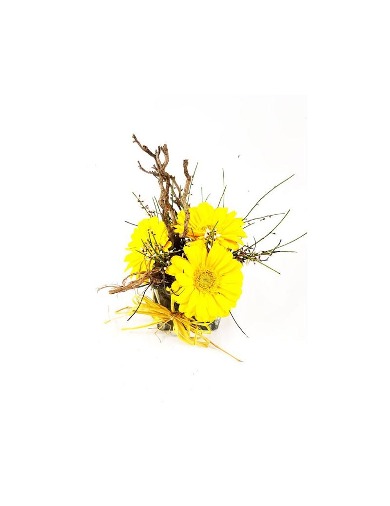 Agapanthus Foglie Gialle gerbere in vaso - tropical flowers